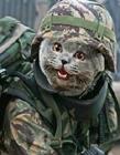 比利时猫照配合政府反恐