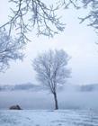 吉林市现迷人雾凇景观