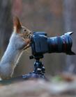 世界上最萌的松鼠