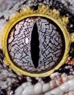 动物眼睛的奥妙