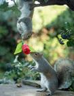 松鼠的习性和特点