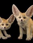 濒危野生动物图片