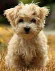 可爱小狗动态图片大全大图