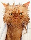 动物洗澡的图片大全