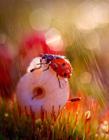 微观动物世界