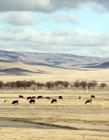 蒙古国风景图片