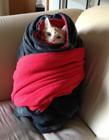 可爱猫咪睡觉图片大全