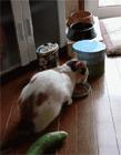 猫咪为什么害怕黄瓜 喵星人怕黄瓜视频 猫被黄瓜吓到gif