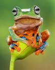 彩色树蛙图片