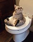 猫咪成精搞笑图 萌猫搞笑图片大集合