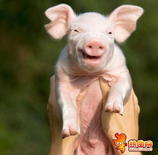 动物笑脸 动物会笑吗 动物笑声