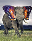 变种动物 动物组合图片