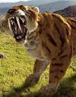 世界上已灭绝的动物 动物灭绝的原因