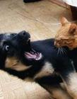 猫和狗打架图片大全 猫和狗打架谁厉害