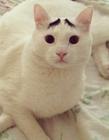 猫咪的眉毛 八字眉�迕�