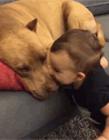 狗狗和宝宝搞笑视频