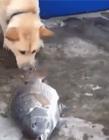 有爱的动物 动物也有爱心