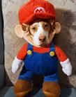 穿衣服的狗狗图片 狗狗穿衣服