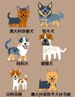 狗的种类及图片 狗的品种大全