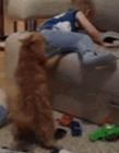 动物搞笑视频短片