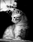 猫咪等主人回家