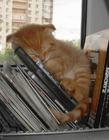 猫咪睡觉姿势