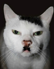 人和动物撞脸 撞脸明星的动物