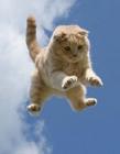 跳跃的猫咪 猫咪跳跃高度