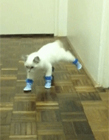 穿着鞋子的猫 猫穿鞋子gif
