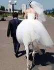 搞笑婚纱照图片 搞笑结婚照片