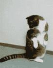 猫咪咬自己尾巴 猫咪甩尾巴