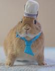 可爱小兔子的图片