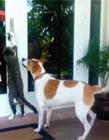 猫咪会开门 猫咪一开门就往外面跑