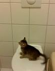 猫咪搞笑视频集锦