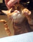 猫咪黏人视频 猫咪喜欢主人的表现