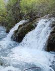 九寨沟诺日朗瀑布图片