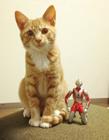 小橘猫与奥特曼图片