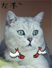 猫咪动态表情包