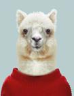 将动物穿上人类的衣服