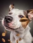 狗狗接食物动作 狗狗吃东西搞笑图片
