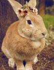 兔子史大力 萌兔史大力