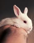 兔子的成长过程图片