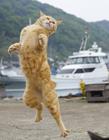 猫咪拳击舞图片