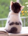 猫咪可爱背影 猫咪背影图片
