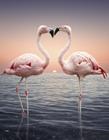 动物爱心造型图片大全