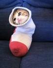 猫被卡住了 猫为什么经常被卡住