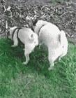 超贱狗狗图片 我是最贱的贱狗