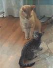 猫咪打架的视频