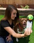 狗狗自拍神器 怎样和狗狗自拍