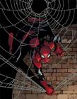 蜘蛛侠不同形态 不同的蜘蛛侠